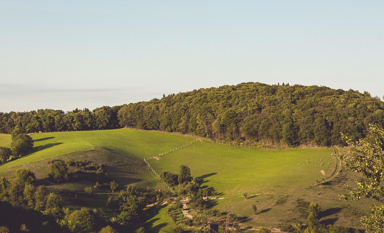 Lammershof-landscape-Bisonhof-214A2420-2015